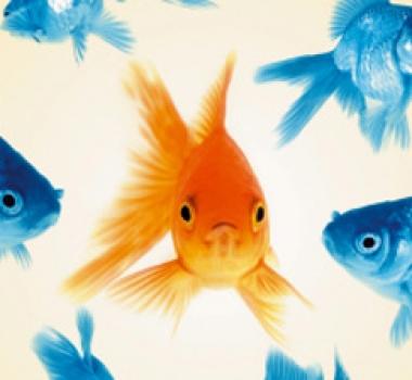 Zo kies je een ERP pakket: denk aan de cavia en de goudvissen!